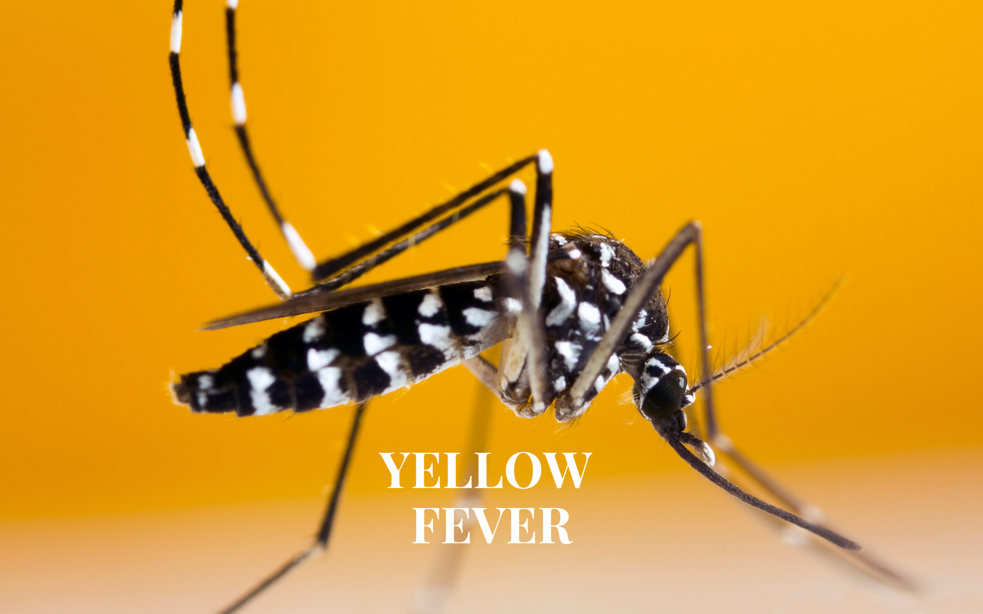 Yellow Fever Vaccines in Croydon